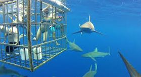 Shark Cage Team Building cape town